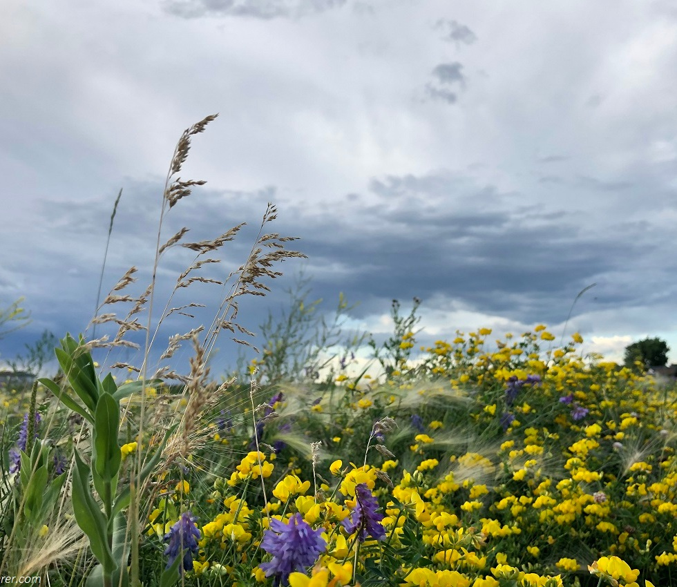 Yellow and purple flowers, weeds in the meadow under a rainy day
