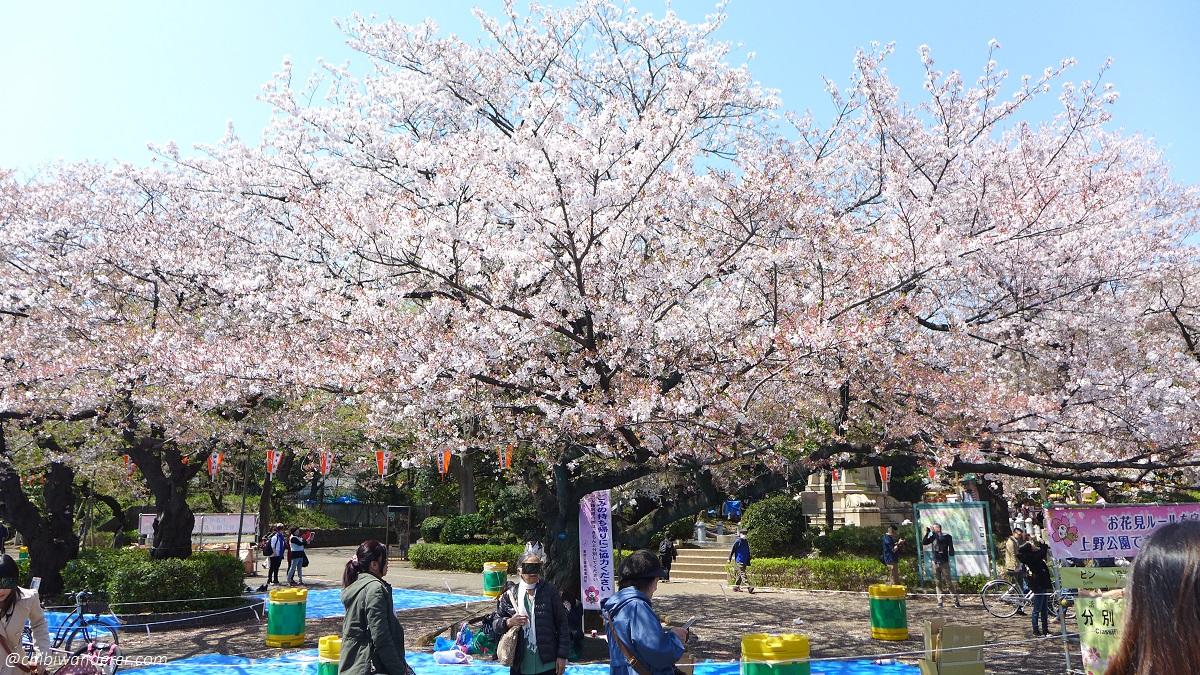 Sakura at Ueno Park Japan